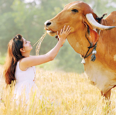 Klimom – Organic Desi Cow Milk and Cow Products